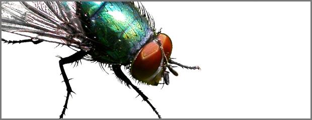 Installing Bugzilla